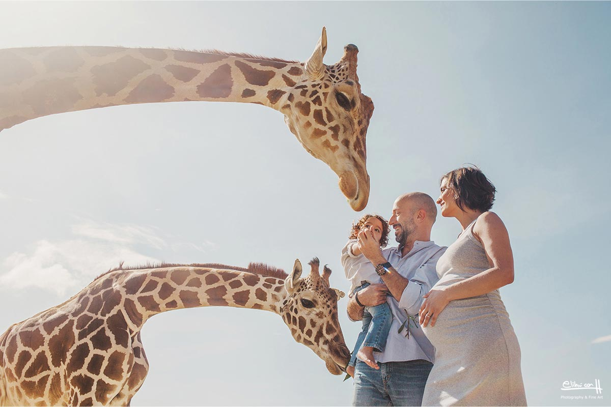 fotografos en puebla, fotos de familia, embarazo en Africam Safari