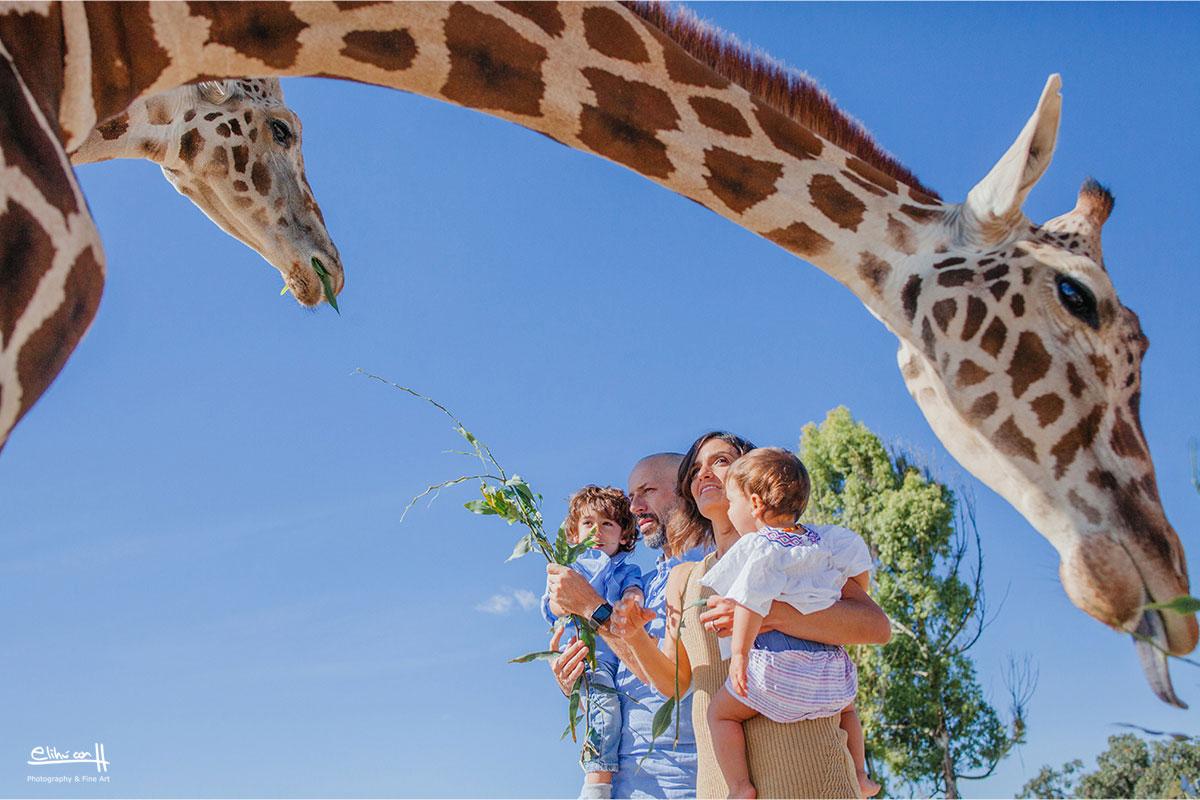 fotos de familia en puebla africam safari