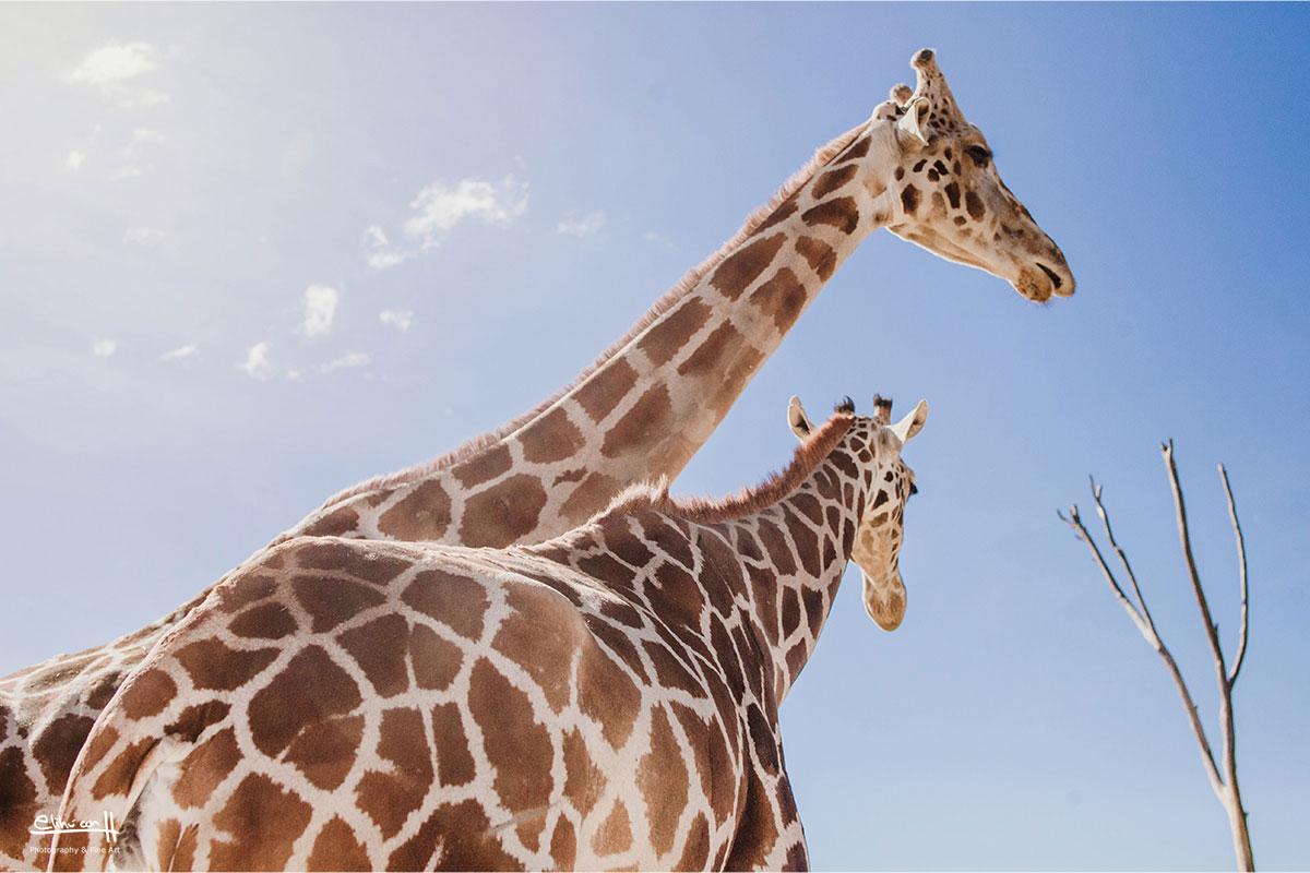 fotos en africam safari puebla